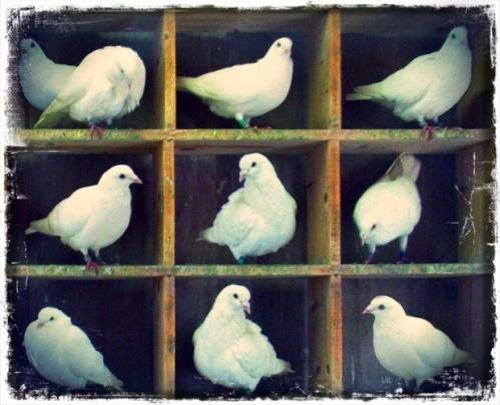 Ducking Pigeonholing